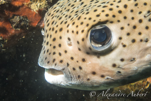 poisson plongée vidéo