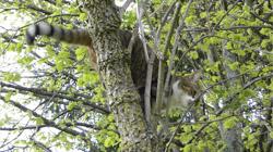 chat_arbre.jpg